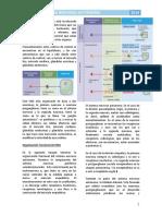 11. Sistema Nervioso Autónomo - Fisiología I.pdf
