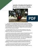 El Alméz más grande y frondoso de España lo tenemos en Caudete