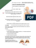 Aparato_respiratorio_(2)[1]
