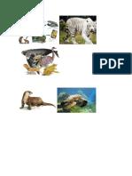 adaptacion especie