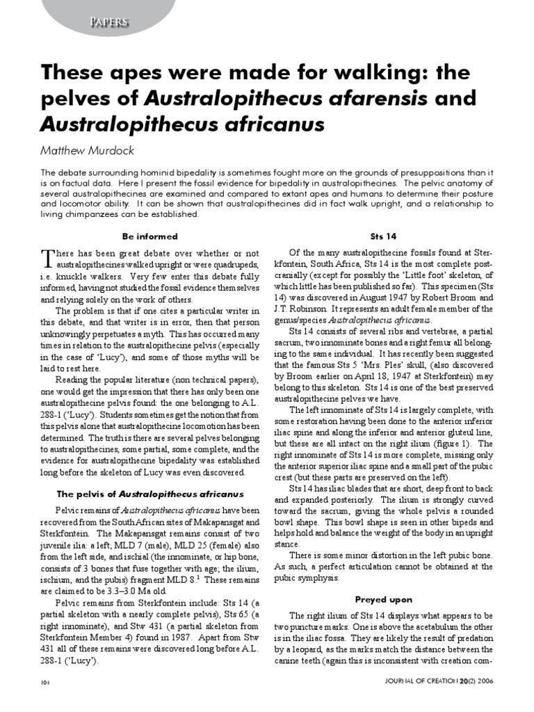 Journal 2012   Lucy (Australopithecus)   Bipedalism