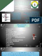 Exposicion Grupo #8 Plegamiento Y Procesamiento De Proteinas / Primer Parcial
