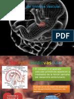 Vascular Embrio