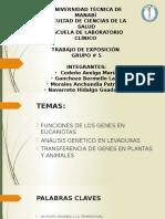 Exposición Grupo 5 Función de Los Genes en Eucariotas. Análisis Genéticos Levaduras. Transferencia de Genes en Plantas y Animales./ SEGUNDO PARCIAL