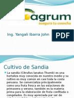 Charla de sandia.pptx