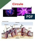 circulo plasmatico
