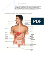 Guia Sistemas Digestivo y Respiratorio