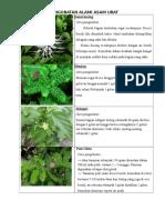 Leaflet Rematikk