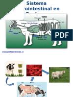 Digestión en bovinos