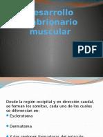 Desarrollo Embrionario Muscular