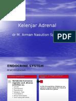 Kelenjar Adrenal (1)