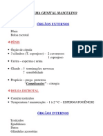 Biologia - Resumo Sistema Reprodutor Masculino
