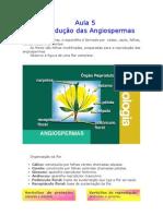 Biologia - Aula 05 - Reprodução das angiospermas