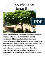 Catambra Planta Alunga Tantarii