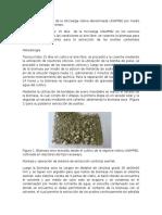 Extraccion de Aceites y Conversion
