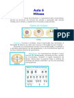 Biologia - Aula 06 - Mitose