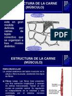 2.ESTRUCTURA DE LA CARNE (MÚSCULO).ppt