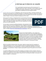Jardinage organique fait base par le biais de ces conseils