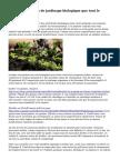 Recommandations de jardinage biologique que tout le monde doit savoir