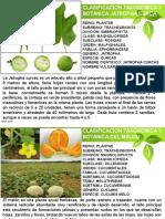 Melon y Jatropa