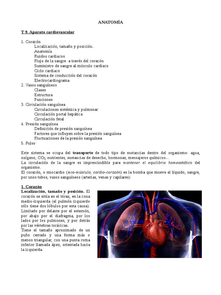 Increíble Definición Anatomía Sistemática Elaboración - Imágenes de ...