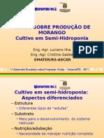Morango Semihidroponico
