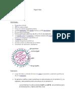 Micro Biologia togaviridae y arteviridae