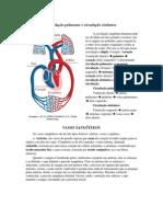 Circulação pulmonar e circulação sistêmica