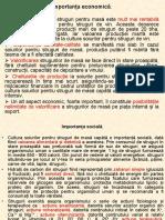 4. Soiuri de Masa.pdf