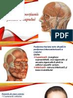 Portiunea Facială a Capului 2015