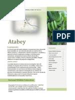 Atabey / B. Informativo vol. 1