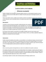 Dionaea Muscipula Manual de Cuidados y Cultivo