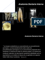 Anatomia Dentaria Interna