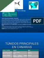 TÚNIDOS EN CANARIAS.ppt