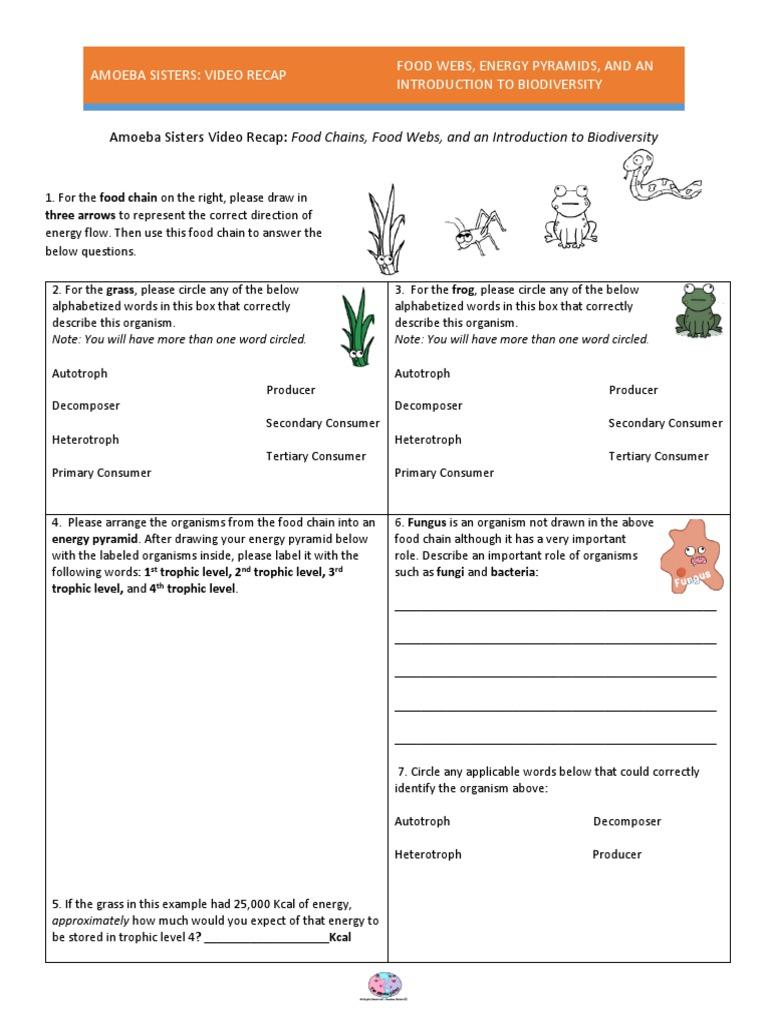 38+ Amoeba sisters carbon and nitrogen cycle worksheet answer key Education