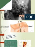 Pelo Formacion Embriologica