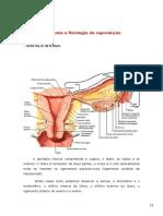 Anatomia e Fisiologia Da Reprodução