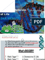 dna and replication powerpoint-km