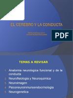 3. El Cerebro y La Conducta