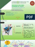Diapositivas de Informe Bibliográfico
