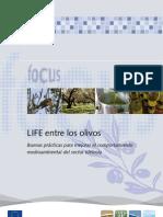 LIFE entre los olivos