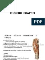 PROIECT-MUSCHII-COAPSEI123