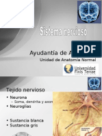 AyAn.03- Sistema Nervioso