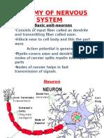 Anatomy of Nervous System