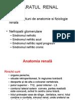Curs Anat Si Fiziol Renala Dr Florea Col AM