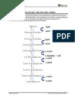 laboratorioooo glicolisis