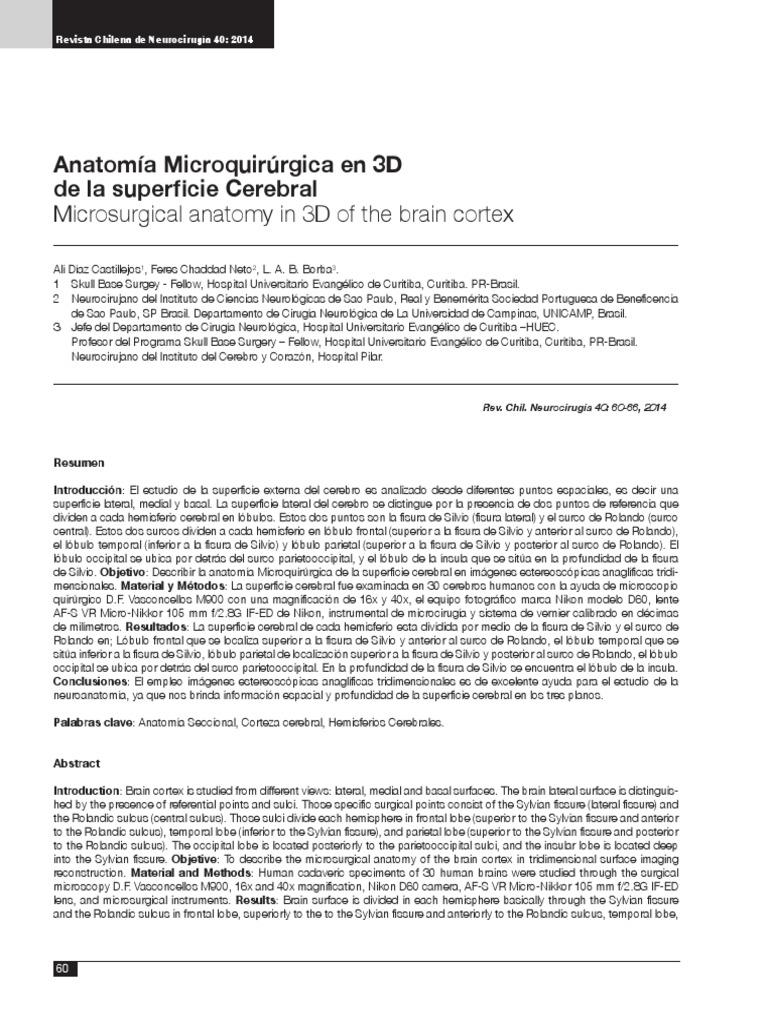 Anatomia 3D