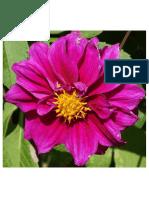 Flower of Munnar