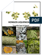 HONGOS_ LIQUENIZADOS