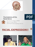 The Anatomy Facial Nerve